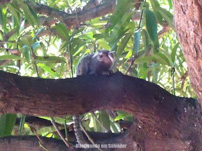 Erconalo Restaurante: Mico em árvore próxima