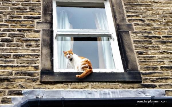 cat and sash window