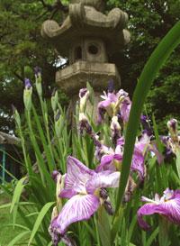 Gokuraku-jodo Garden, Shitennoji, Osaka