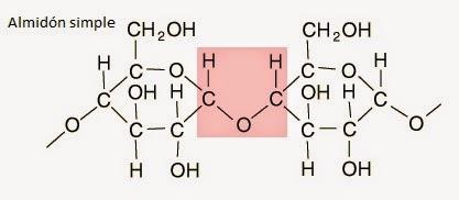 starch enlace glucosídico glicosídico glucosa glucose glycosidic bond