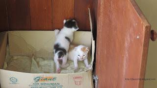 kelebihan kucing dengan haiwan lain