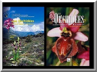orchidees sauvages ophrys x obscura. Black Bedroom Furniture Sets. Home Design Ideas