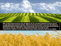 20- Bilin ki, dünya hayatı ancak bir oyun, bir eğlence, bir süs, aranızda karşılıklı bir övünme, çok mal ve evlat sahibi olma yarışından ibarettir. (Nihayet hepsi yok olur gider). Tıpkı şöyle: Bir yağmur ki, bitirdiği bitki çiftçilerin hoşuna gider. Sonra kurumaya yüz tutar da sen onu sararmış olarak görürsün. Sonra da çer çöp olur. Ahirette ise (dünyadaki amele göre ya) çetin bir azap ve(ya) Allah'ın mağfiret ve rızası vardır. Dünya hayatı, aldanış metaından başka bir şey değildir.