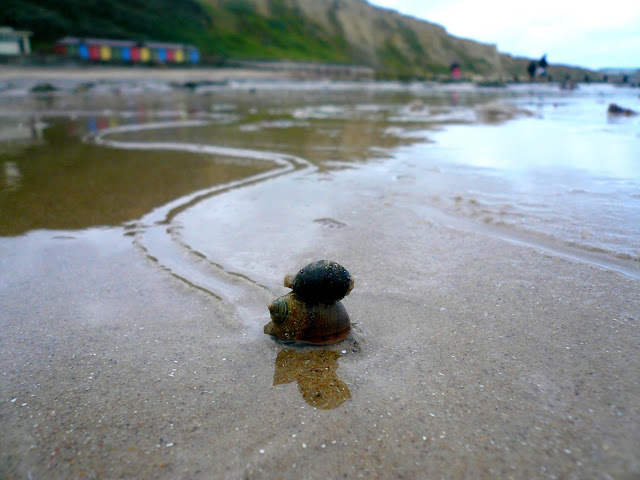 snail trail in the sand