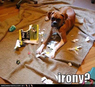 1a887_funny-dog-pictures-dog-ate-your-book-about-dogs.jpg