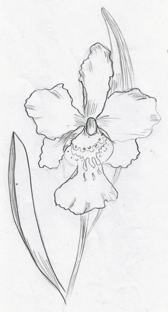 Simple Orchid Drawing Orchids have many many