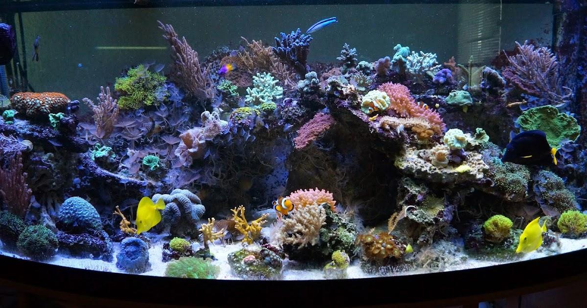 korallenableger in braunschweig juwel vision 450l meerwasser aquarium aufl sung inkl technik. Black Bedroom Furniture Sets. Home Design Ideas