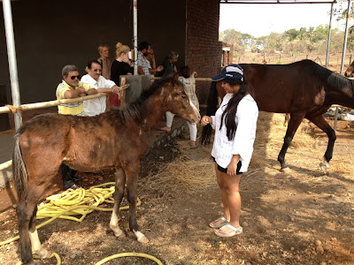 equestrian holidays for families and groups