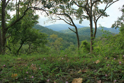 The forested valleys between K.Gudi and BR temple inside BRT tiger reserve, Karnataka