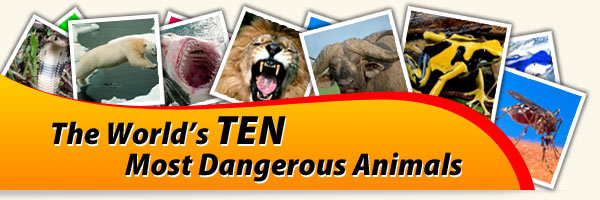 Most dangerous animals chart