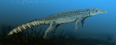 """Chenanisuchus"""""""
