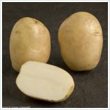 Pentland Javelin new potatoes