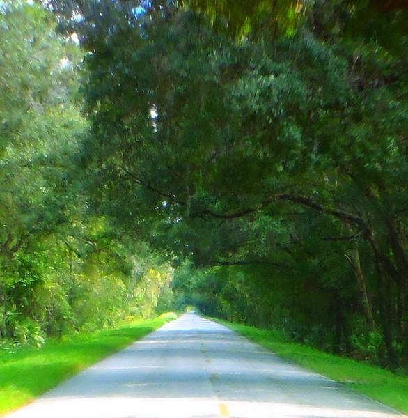 swamp road by dear miss mermaid