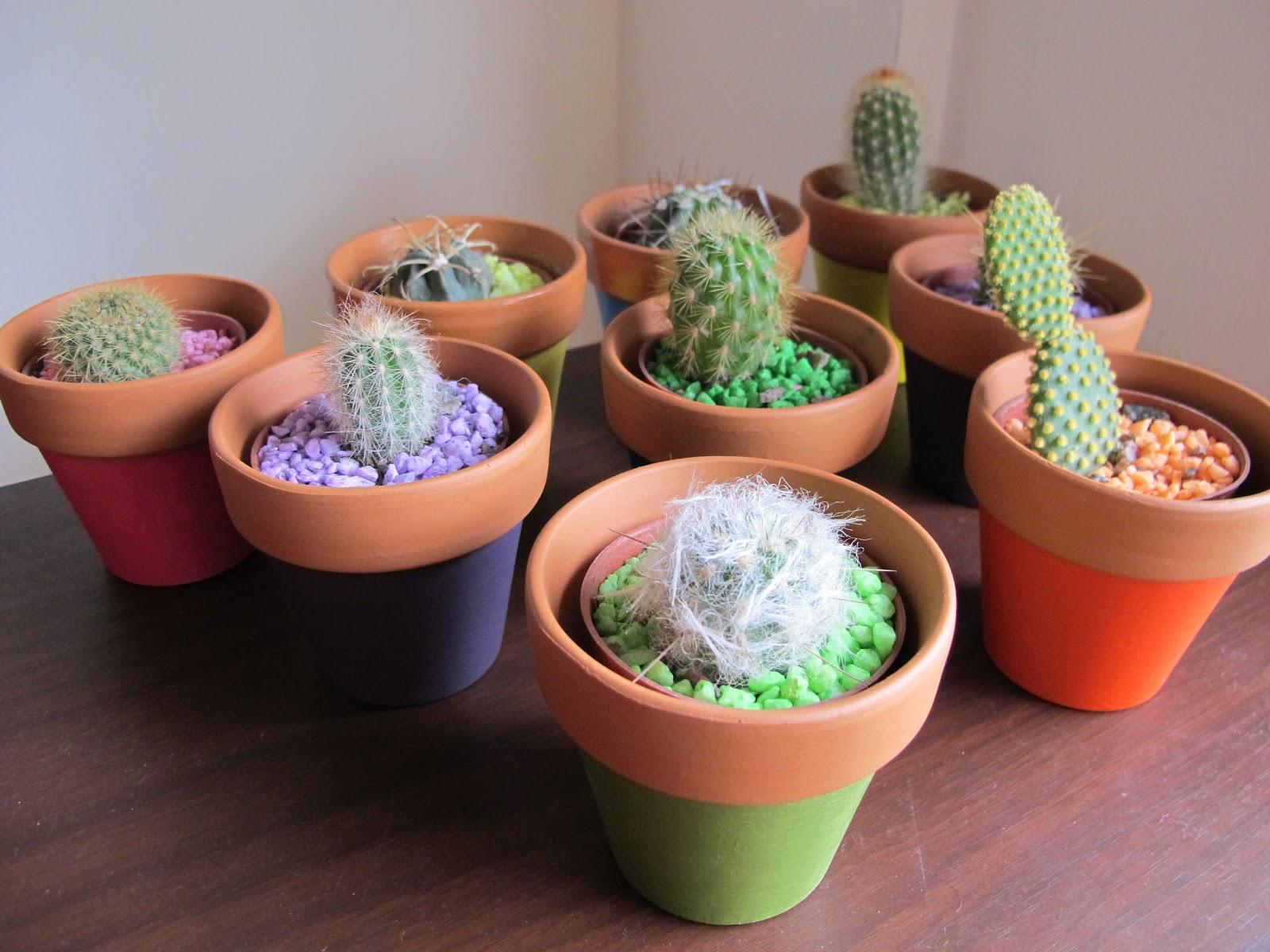 Aikan deco y jardin macetas mini cactus - Cactus en macetas pequenas ...