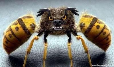 funny_picture_funny_insect_vandanasanju.blogspot.com