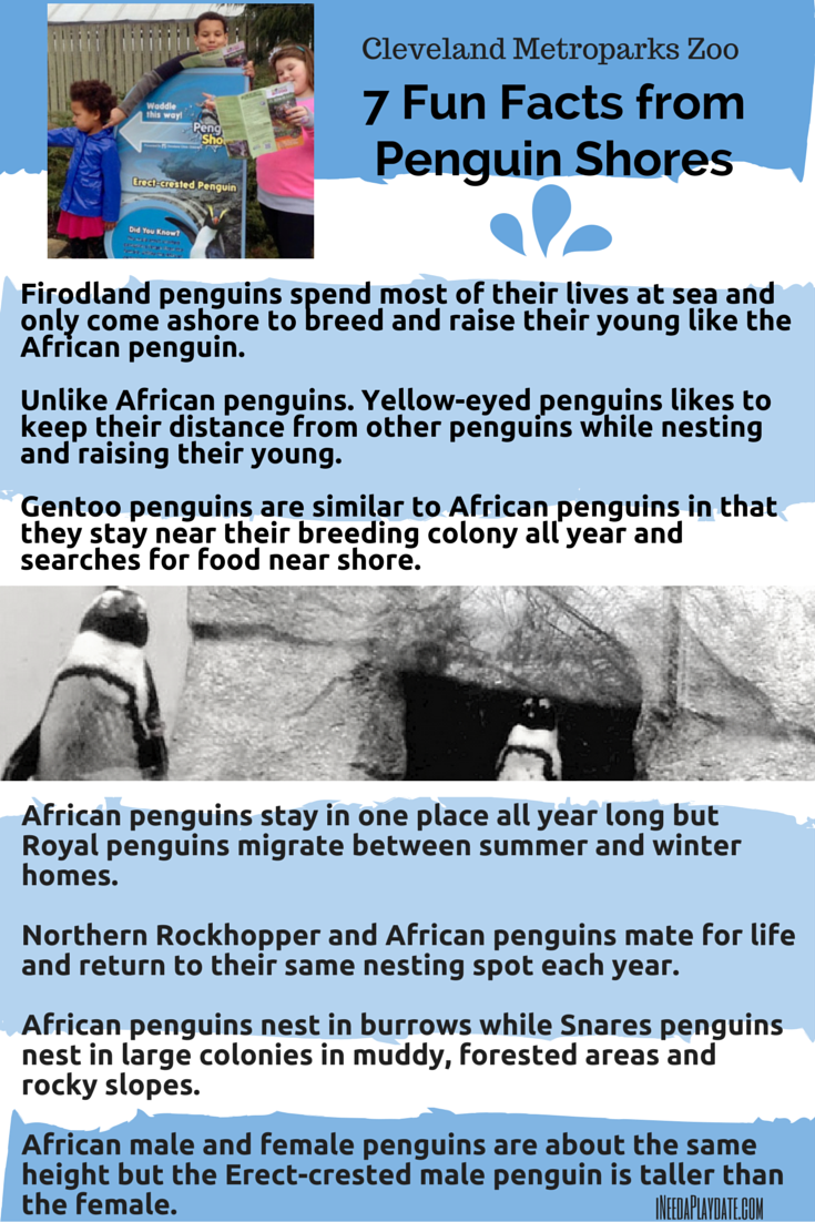 7 Facts from Penguin Shores at Cleveland Metroparks Zoo | ineedaplaydate.com