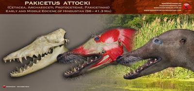 Pakicetus skull