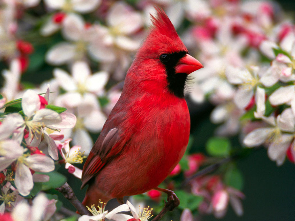 Beautiful  Colorful Cute Birds Wallpapers Seen On www.coolpicturegallery.us