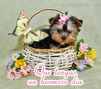 Que tengas un hermoso día mensaje para compartir mascota con flores
