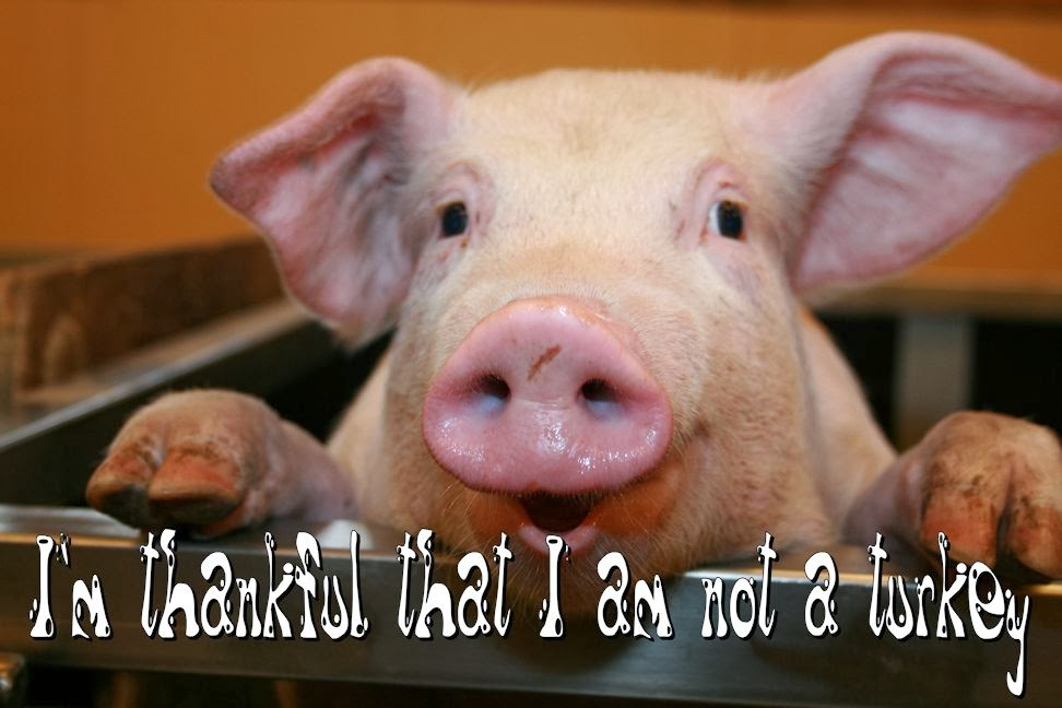 "A pig says ""I'm Thankful I'm not a turkey"""
