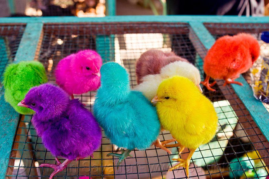 4. Rainbow Colored Chicks