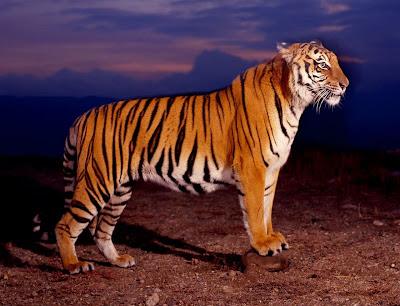 Colorido tigre embelleciendo el paisaje