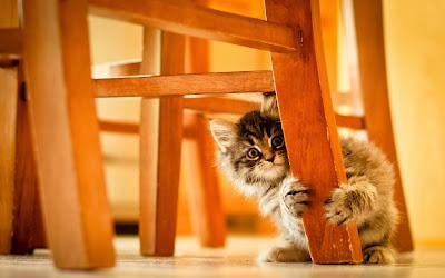Gatito jugando con los muebles de la casa