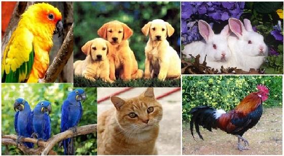 jenis hewan peliharaan,burung,kucing,anjing,kelinci,ayam