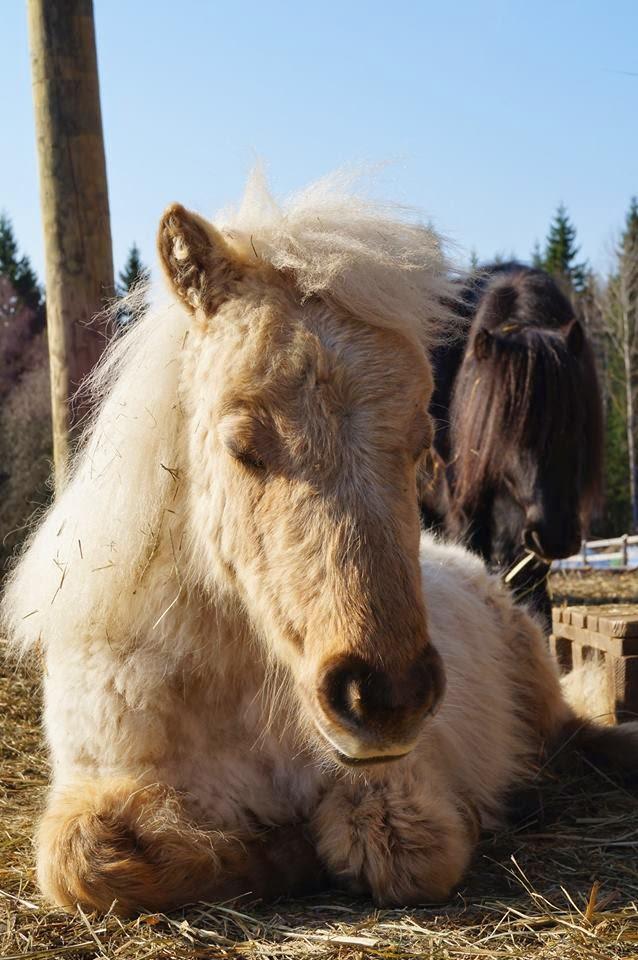 Knut från Nyhammar