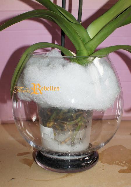 hydroculture, avez-vous testé cette façon ? Grand+Phalaenopsis+blanc+hydro+juil+11+9