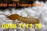 http://ctydietmoitruongphat.blogspot.com/2014/03/su-kien-va-phong-chong-moi-formosa.html