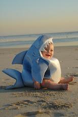 El tiburón...
