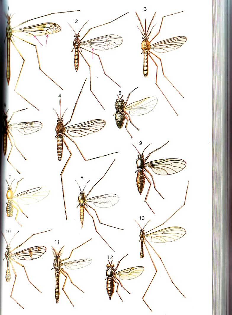 Deladelmur muss ti for Le zanzare non pungono i malati