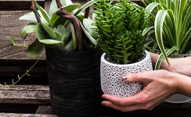 urban jungle, zimmerpflanzen, dekorieren mit pflanzen