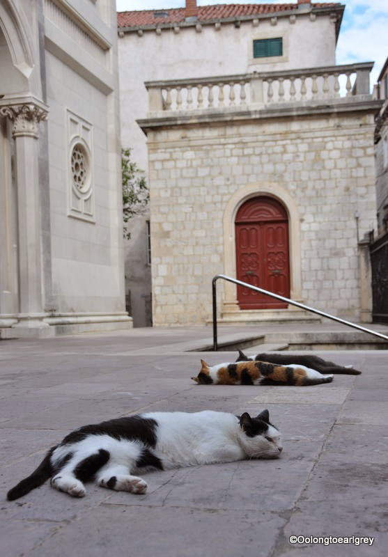 Napping cats, Dubrovnic, Croatia
