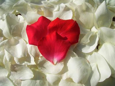petalos flores