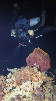 "<a href=""http://mataram.info/things-to-do-in-bali/visitindonesia-banda-marine-life-the-paradise-of-diving-topographic-point-inward-fundamental-maluku/"">Indonesia</a>best destinations : Nighttime Dive Inwards Siaba Besar"