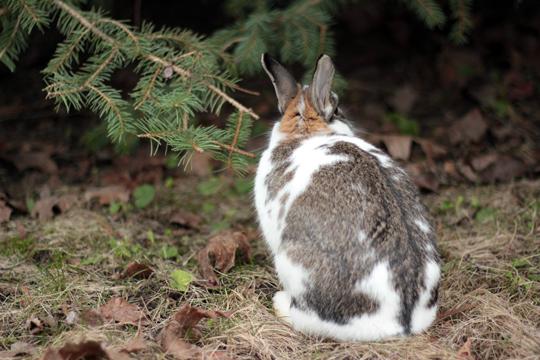 bunny hiding under a tree