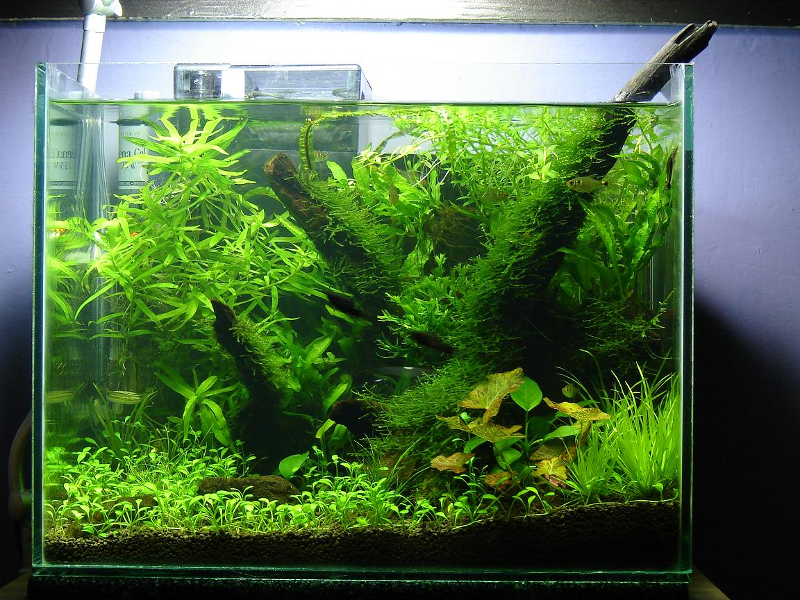 Nano Aquascaping
