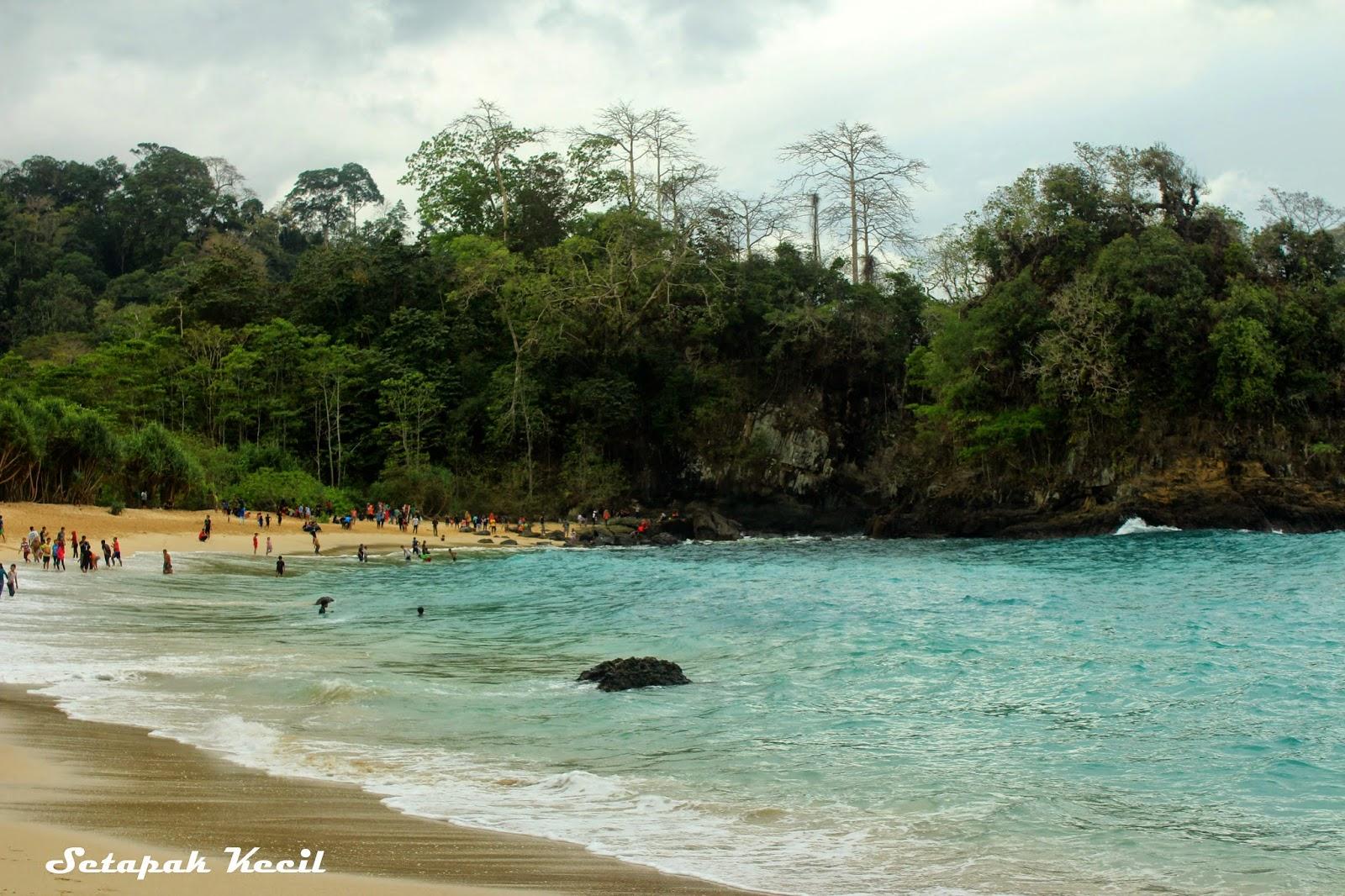Setapak Kecil Green Bay Mutiara Hijau Di Taman Nasional Meru Betiri
