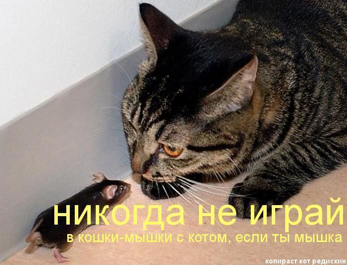 Никогда не играй в кошки-мышки с котом, если ты мышка