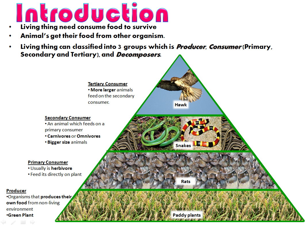 chain of information The food chain is the transfer of energy from one species to another all living things needs energy for living beings to grow within a food chain, some living things create the energy (producers) and some use the energy (consumers.
