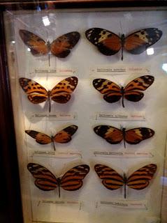 Butterfly exhibit - Sketchbook - Grant Museum of Zoology Field Trip London - Arts Award Bronze Level Art Portfolio Ideas