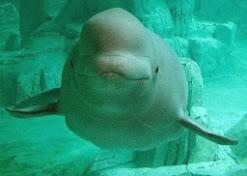 El biólogo marino Michel André alerta
