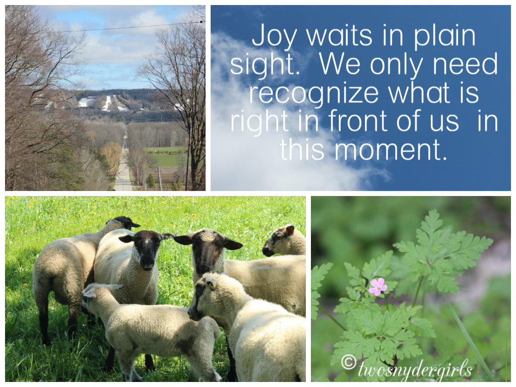 Joy waits in plain sight.