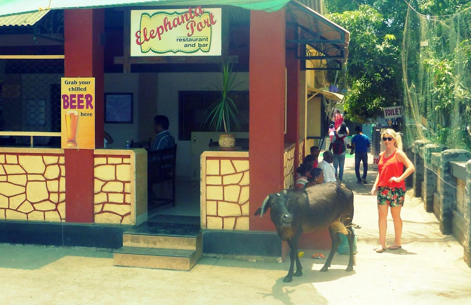 Cow outside bar on Elephanta Island