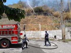 Bomberos atienden incendio forestal en plantación de pinos de Campo Claro
