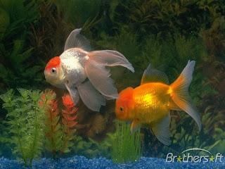 Sravanthi Fish Aquariums