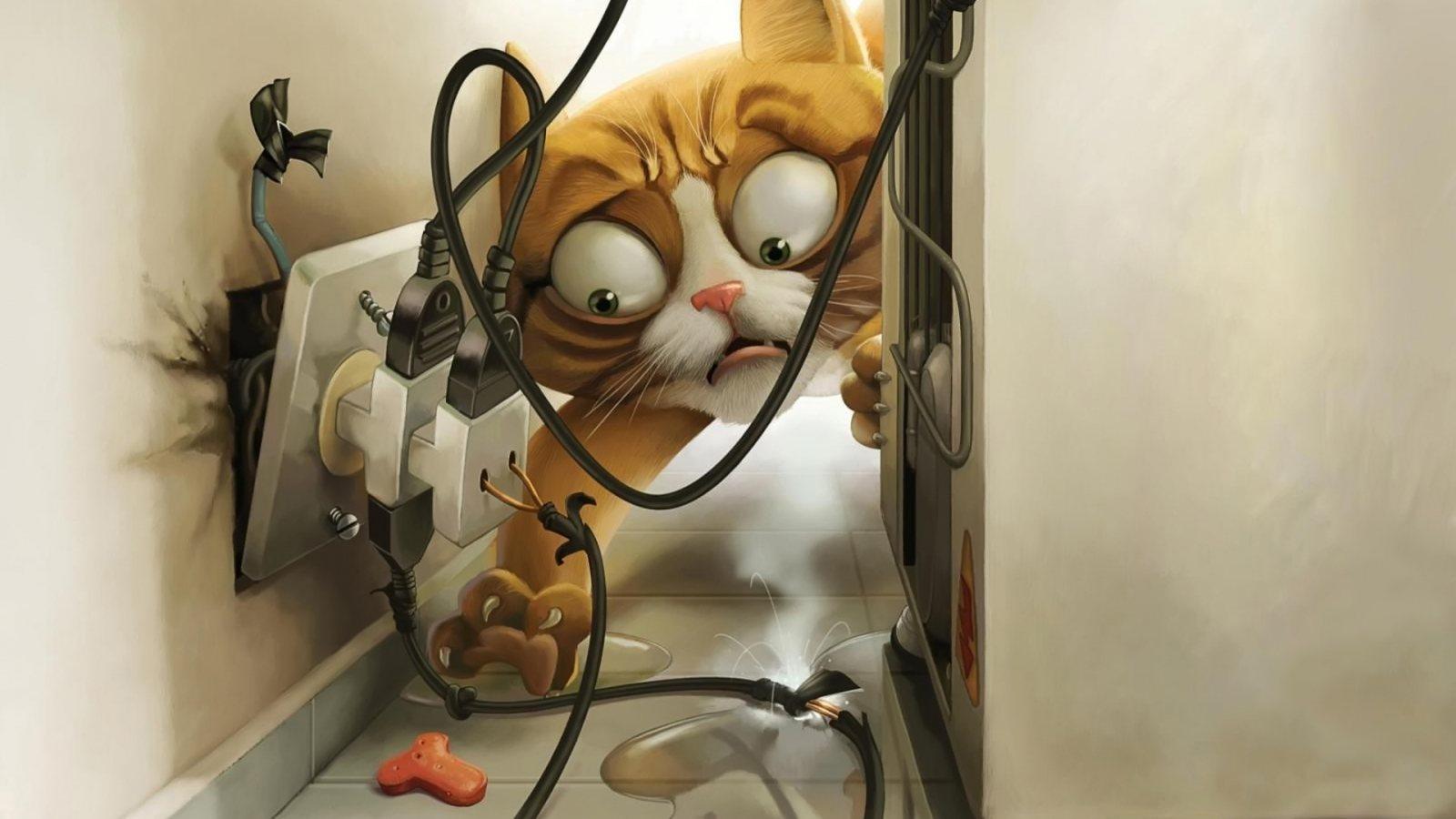 http://1.bp.blogspot.com/-cI790a56TsA/T0ZqM3TlpQI/AAAAAAAAGP4/8KoFwmHWVyc/s1600/Crazy%2Bcat.jpg
