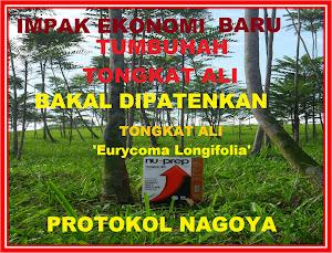 Protokol Nagoya tumbuhan Tongkat Ali-Eurycoma Longifolia dipatenkan IMPAK TERBAIK EKONOMI NEGARA